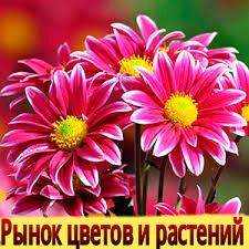 """title=""""КНИГИ"""""""